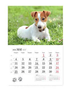Koerakalender 3. pilt